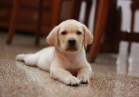 【LOBOFLOR】ペットとの暮らしを快適・安全に!
