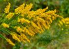 花粉の季節に!「花粉対策カーテン」のススメ